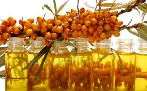 Облепиховое масло - польза Oleum Hippopae