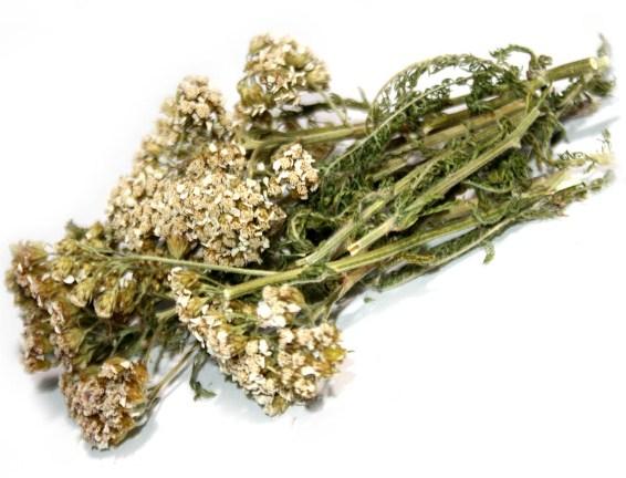 Сбор, заготовка и хранение травы
