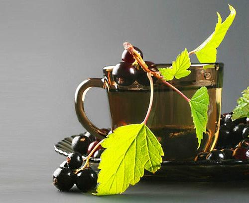 Чай из листьев смородины - как правильно заваривать, рецепты