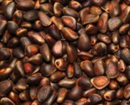 Кедровые орехи - польза и вред