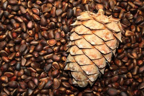 Как правильно выбрать орехи и способы хранения