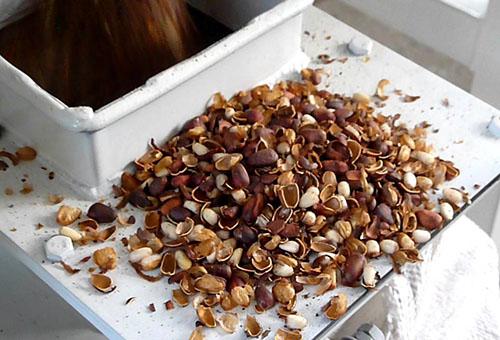 Польза от ореховой скорлупы