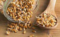 Пророщенная пшеница - польза и вред