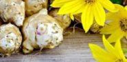 Топинамбур - польза и вред для здоровья