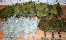 Когда заготавливать веники для бани: березовые, дубовые и другие: фото, видео