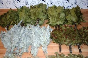 Когда можно заготавливать березовые веники для бани? 🚩 веники для бани заготовка 🚩 Хобби и развлечения 🚩 Другое