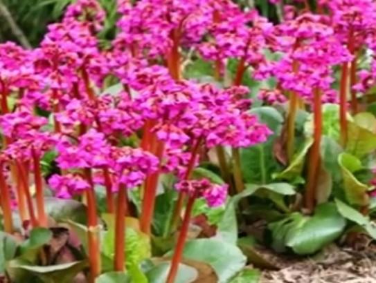Общее описание растения