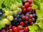 Виноград — польза и вред для здоровья организма