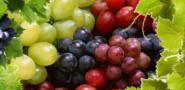 Виноград - польза и вред для организма, состав, калорийность. Полезные свойства ягод, косточек, листьев и противопоказания