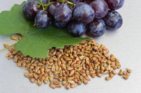 Косточки винограда - польза и вред