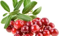 Полезные свойства и противопоказания клюквы, народные рецепты
