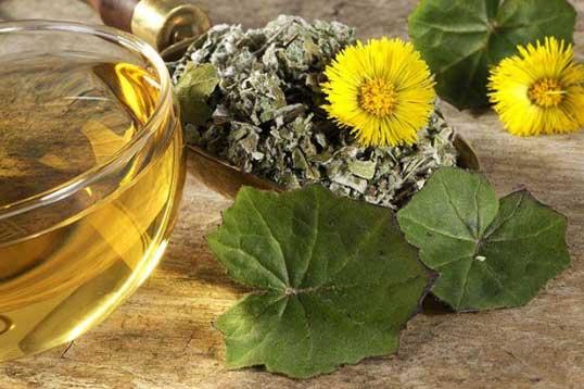 Полезные свойства травы и листьев