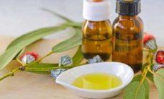 Эфирное масло эвкалипта – свойства и применение. Описание и состав