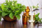 Эфирное масло мяты свойства и применение для красоты и здоровья кожи!