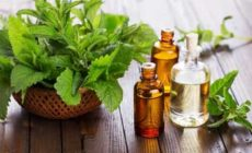Эфирное масло мяты свойства и применение. Описание масла, состав