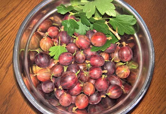Рецепты народной медицины с листьями и ягодами крыжовника