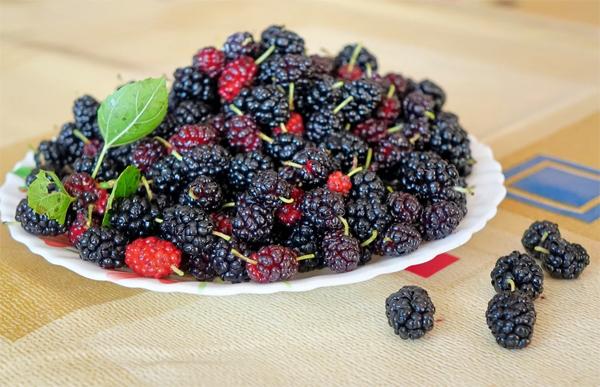 Состав и калорийность ягоды