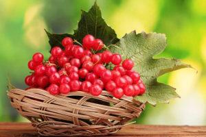 Калина: польза и вред для здоровья. При диабете, для печени и др.