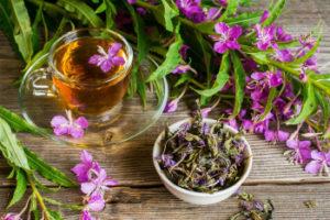 Иван-чай (кипрей): лечебные свойства и противопоказания для женщин, мужчин, детей Как ферментировать, как заваривать Отзывы