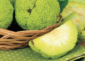 Адамово яблоко: лечебные свойства и применение