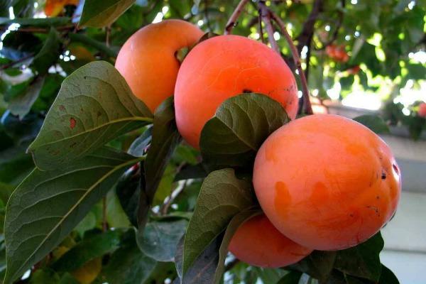 Где и как растут плоды?