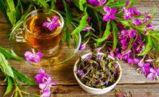 Иван-чай ферментированный: лечебные свойства и противопоказания Отзывы