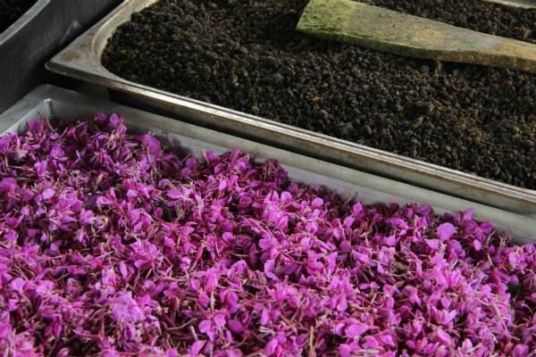 Методы ферментирования иван-чая