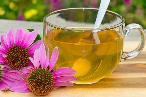Вкусный и полезный чай из эхинацеи