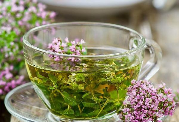 Чай из золототысячника