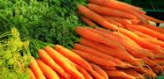 Морковь: польза и вред для организма женищины, мужчины Лечебные свойства Калорийность Видео